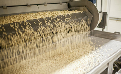 Food manufacturing grain sorting process